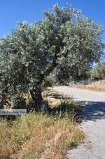 Poros | Saronische eilanden | GriechenlandWeb.de Foto 216 - Foto GriechenlandWeb.de