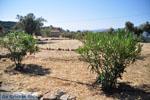 Poros | Saronische eilanden | De Griekse Gids Foto 217 - Foto van De Griekse Gids