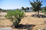 Poros | Saronische eilanden | De Griekse Gids Foto 218 - Foto van De Griekse Gids