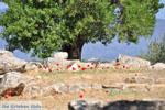 Poseidon heiligdom Poros | Saronische eilanden | De Griekse Gids Foto 223 - Foto van De Griekse Gids