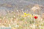 Poros | Saronische eilanden | De Griekse Gids Foto 255 - Foto van De Griekse Gids