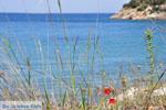 Poros | Saronische eilanden | De Griekse Gids Foto 256 - Foto van De Griekse Gids