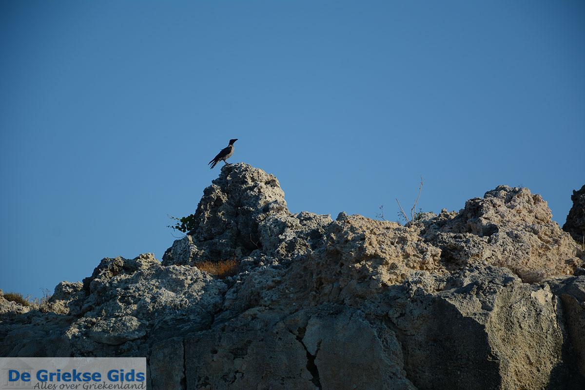 foto Kalithea Rhodos - Rhodos Dodecanese - Foto 501