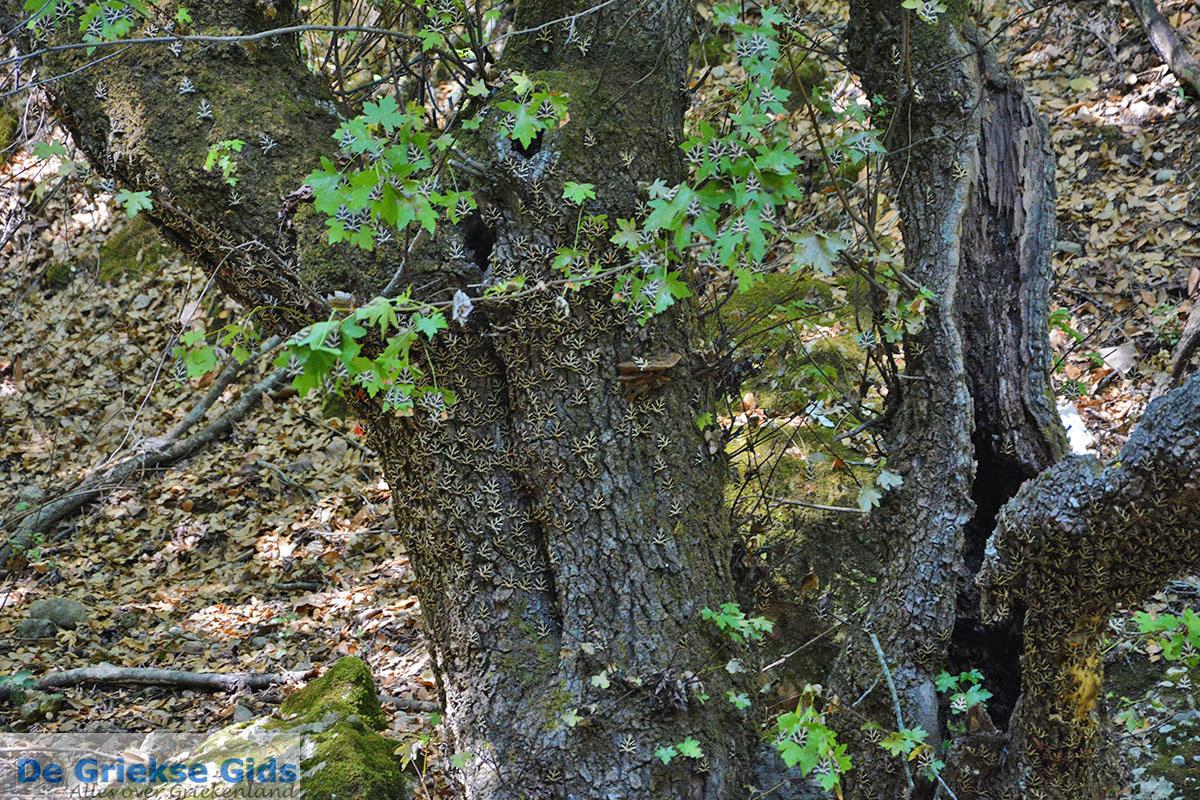 foto Vlindervallei Rhodos - Rhodos Dodecanese - Foto 1839