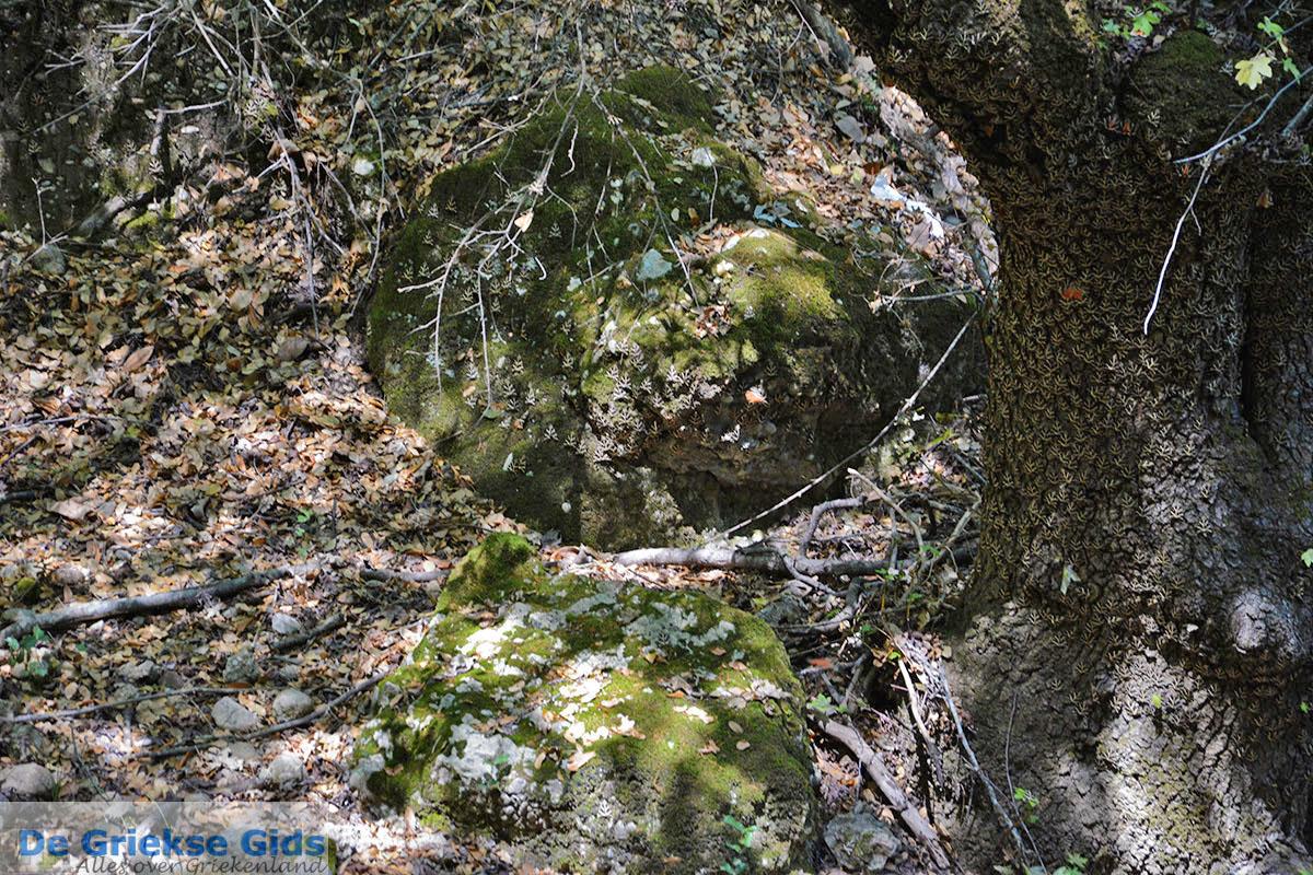 foto Vlindervallei Rhodos - Rhodos Dodecanese - Foto 1842