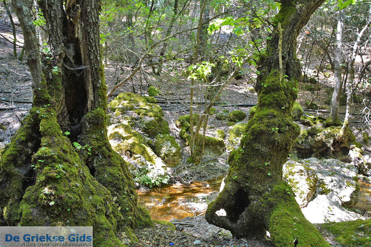 foto Vlindervallei Rhodos - Rhodos Dodecanese - Foto 1889