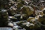 Epta Piges - Zeven bronnen Rhodos - Rhodos Dodecanese - Foto 160 - Foto van De Griekse Gids