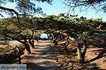 Filerimos Rhodos - Rhodos Dodecanese - Foto 304 - Foto van De Griekse Gids