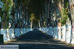 Kolymbia Rhodos - Rhodos Dodecanese - Foto 683 - Foto van De Griekse Gids