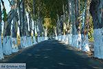Kolymbia Rhodos - Rhodos Dodecanese - Foto 684 - Foto van De Griekse Gids