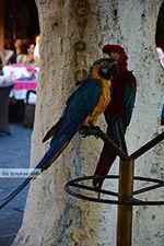 Rhodos stad Rhodos - Rhodos Dodecanese - Foto 1374 - Foto van De Griekse Gids