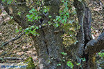 Vlindervallei Rhodos - Rhodos Dodecanese - Foto 1839 - Foto van De Griekse Gids