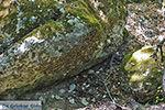 Vlindervallei Rhodos - Rhodos Dodecanese - Foto 1841