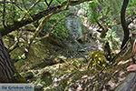 Vlindervallei Rhodos - Rhodos Dodecanese - Foto 1863 - Foto van De Griekse Gids