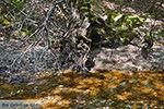 Vlindervallei Rhodos - Rhodos Dodecanese - Foto 1888 - Foto van De Griekse Gids