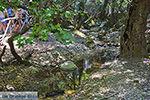 Vlindervallei Rhodos - Rhodos Dodecanese - Foto 1891 - Foto van De Griekse Gids