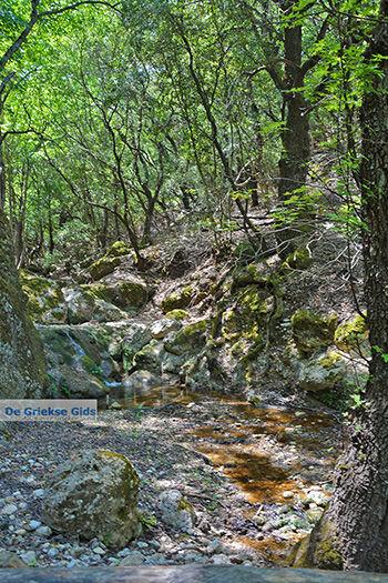 Vlindervallei Rhodos - Rhodos Dodecanese - Foto 1885 - Foto van https://www.grieksegids.nl/fotos/rhodos/350/vlindervallei-062.jpg