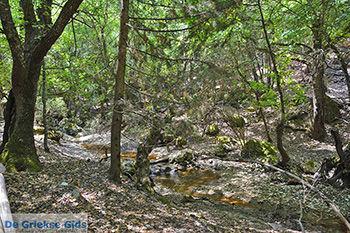 Vlindervallei Rhodos - Rhodos Dodecanese - Foto 1887 - Foto van https://www.grieksegids.nl/fotos/rhodos/350/vlindervallei-064.jpg