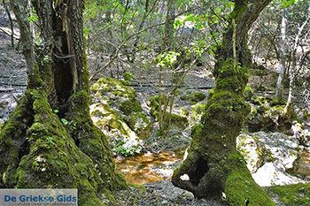 Vlindervallei Rhodos - Rhodos Dodecanese - Foto 1889 - Foto van https://www.grieksegids.nl/fotos/rhodos/350/vlindervallei-066.jpg