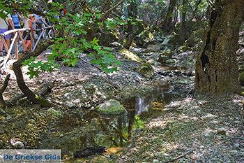 Vlindervallei Rhodos - Rhodos Dodecanese - Foto 1891 - Foto van https://www.grieksegids.nl/fotos/rhodos/350/vlindervallei-068.jpg