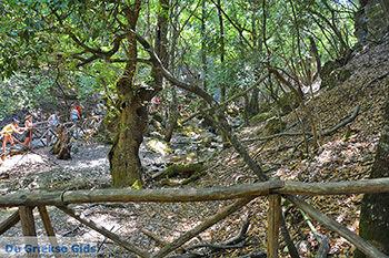 Vlindervallei Rhodos - Rhodos Dodecanese - Foto 1892 - Foto van https://www.grieksegids.nl/fotos/rhodos/350/vlindervallei-069.jpg
