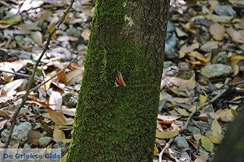 Vlindervallei Rhodos - Rhodos Dodecanese - Foto 1894 - Foto van https://www.grieksegids.nl/fotos/rhodos/350/vlindervallei-071.jpg