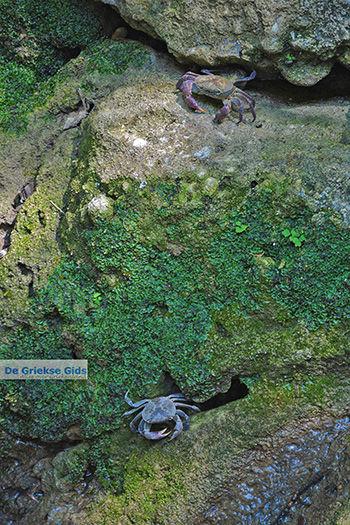 Vlindervallei Rhodos - Rhodos Dodecanese - Foto 1896 - Foto van https://www.grieksegids.nl/fotos/rhodos/350/vlindervallei-073.jpg