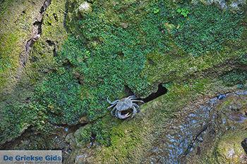 Vlindervallei Rhodos - Rhodos Dodecanese - Foto 1898 - Foto van https://www.grieksegids.nl/fotos/rhodos/350/vlindervallei-075.jpg