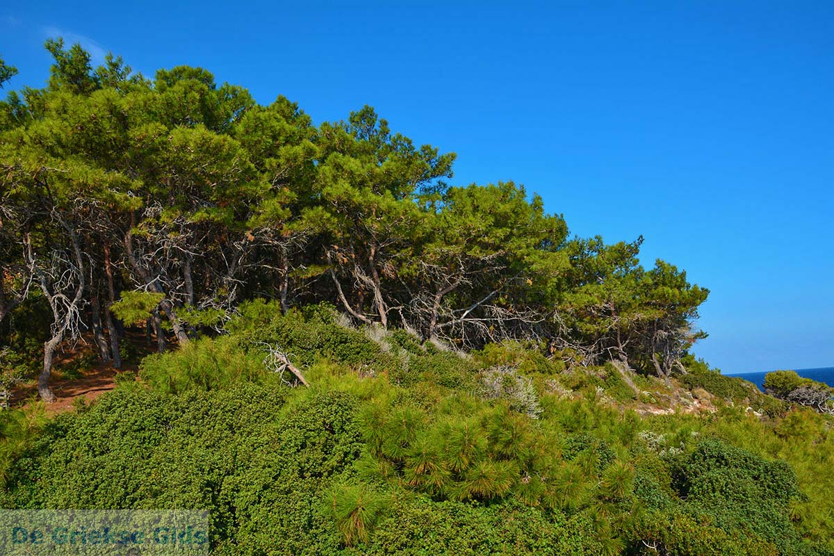 foto Avlakia Samos   Griekenland   De Griekse Gids foto 22
