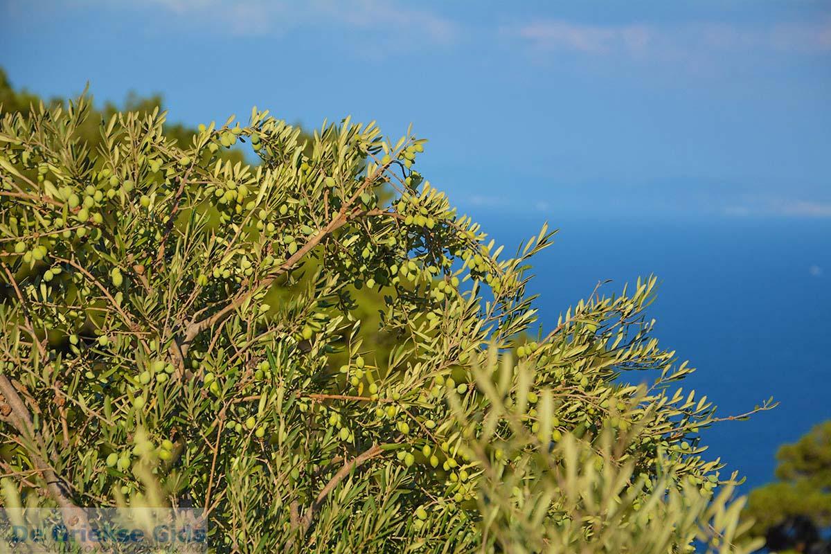 foto Vourliotes Samos | Griekenland | Foto 26