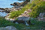 Psili Ammos Mykali Samos | Griekenland | Foto 11 - Foto van De Griekse Gids