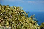 Vourliotes Samos | Griekenland | Foto 26 - Foto van De Griekse Gids