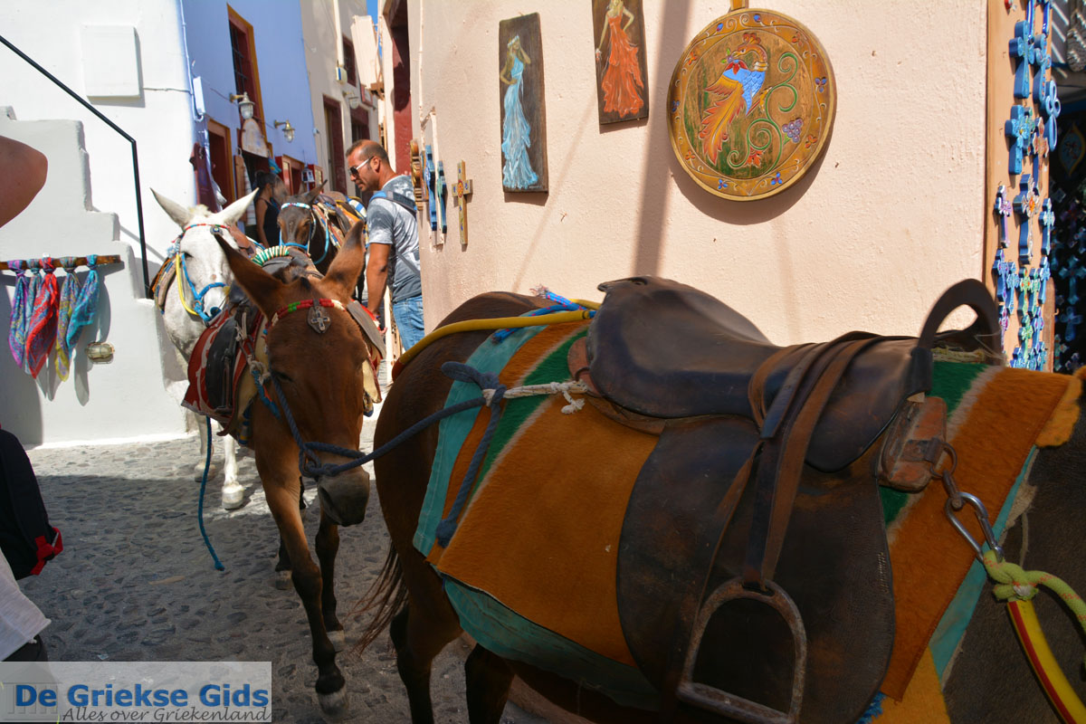 foto Oia Santorini | Cycladen Griekenland | Foto 1173