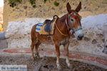 Fira Santorini | Cycladen Griekenland  | Foto 0057 - Foto van De Griekse Gids