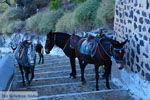 Fira Santorini | Cycladen Griekenland  | Foto 0065 - Foto van De Griekse Gids