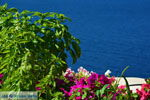 Oia Santorini | Cycladen Griekenland | Foto 1082 - Foto van De Griekse Gids
