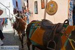 Oia Santorini | Cycladen Griekenland | Foto 1173 - Foto van De Griekse Gids