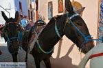 Oia Santorini | Cycladen Griekenland | Foto 1175 - Foto van De Griekse Gids