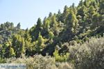 Stranden en natuur bij Vourvourou | Sithonia Chalkidiki | De Griekse Gids foto 32 - Foto van De Griekse Gids