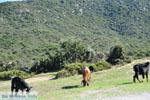 Ergens tussen Paralia Sykias en Kalamitsi | Sithonia Chalkidiki | Foto 4 - Foto van De Griekse Gids