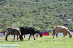 Ergens tussen Paralia Sykias en Kalamitsi | Sithonia Chalkidiki | Foto 5 - Foto van De Griekse Gids