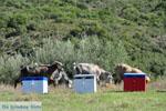 Ergens tussen Paralia Sykias en Kalamitsi | Sithonia Chalkidiki | Foto 6 - Foto van De Griekse Gids