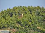 Beboste berghellingen Koutsouri Skiathos foto 1 - Foto van De Griekse Gids