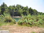 Beschermd gebied Koukounaries - Skiathos - foto 7