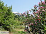 Skiathos Palace gezien vanaf Koukounaries - Skiathos - Foto van De Griekse Gids