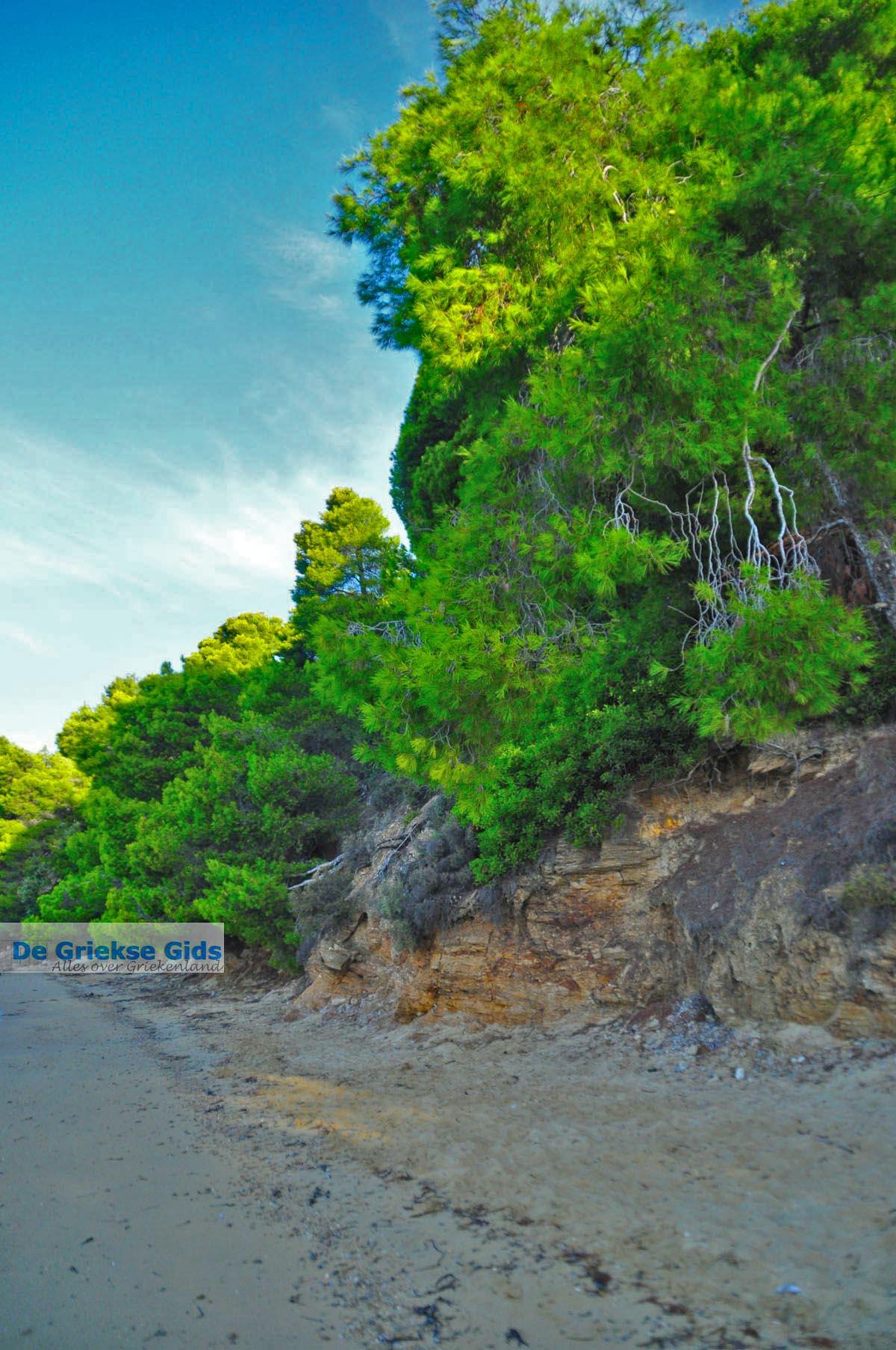foto Maratha beach bij Koukounaries | Skiathos Sporaden | De Griekse Gids foto 13