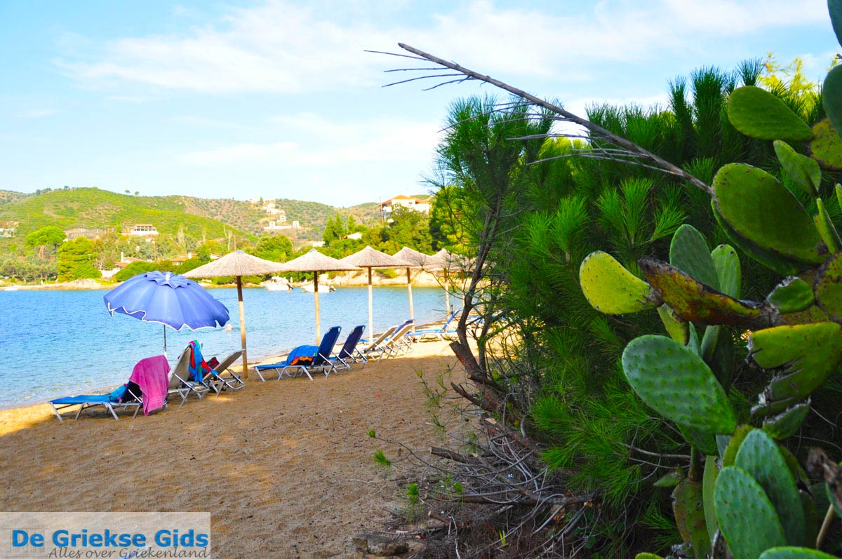 foto Aghia Paraskevi (Platanias beach) | Skiathos Sporaden | De Griekse Gids foto 31