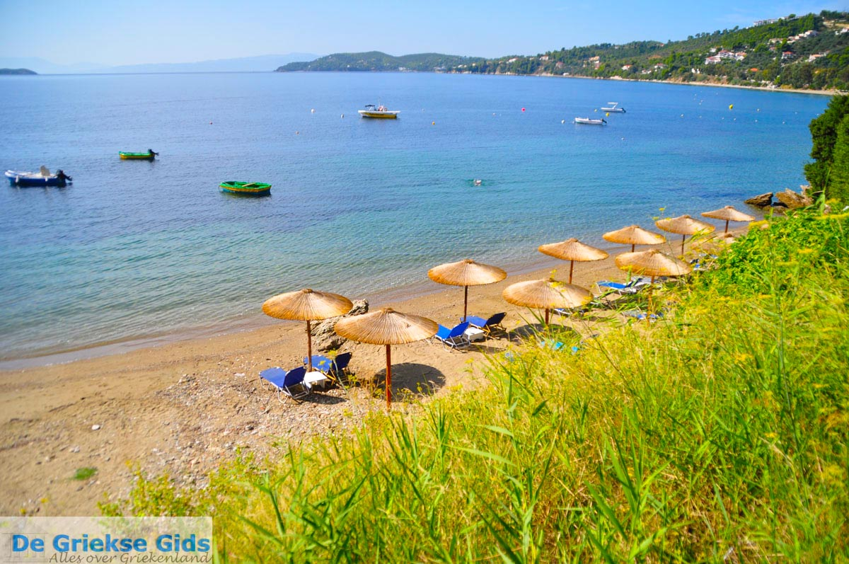 foto Megali Ammos (Ftelia) | Skiathos Sporaden Griekenland foto 2