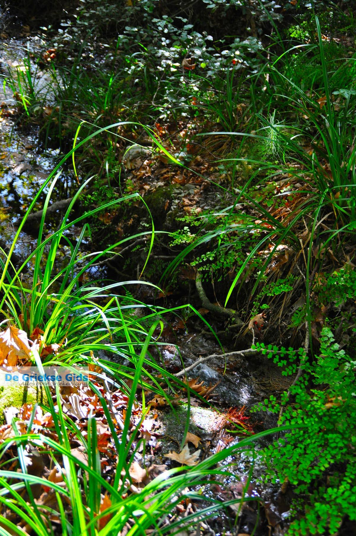 foto Wandelpaden bij Klooster Kechria | Skiathos Sporaden Griekenland foto 7