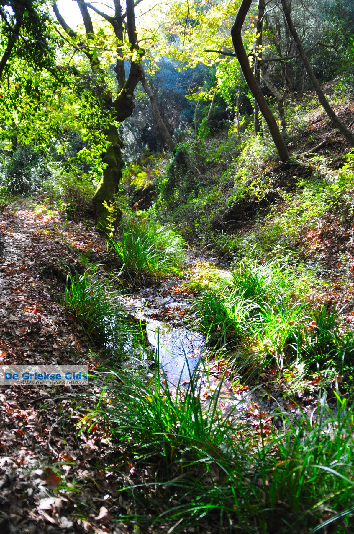 foto Wandelpaden bij Klooster Kechria | Skiathos Sporaden Griekenland foto 18